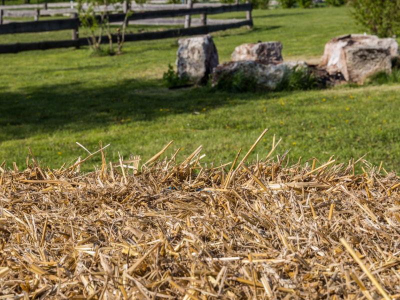 Ein Foto von Piris Farm