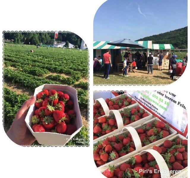 Wir lieben Erdbeeren !