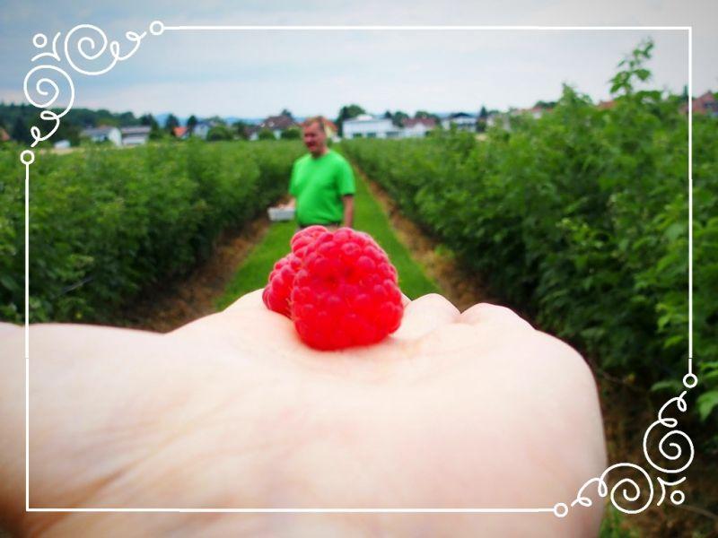 Erdbeeren/Himbeeren Kultivierung