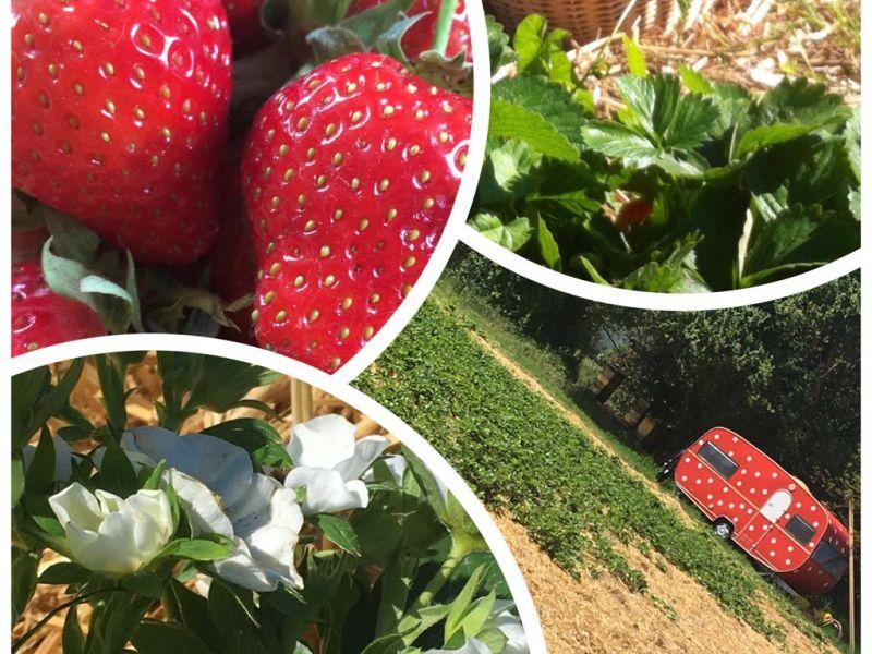 Wir lieben Erdbeeren …