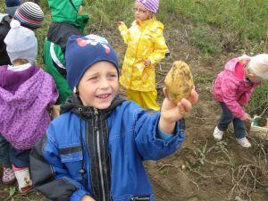 Kindergarten Kartoffelernte