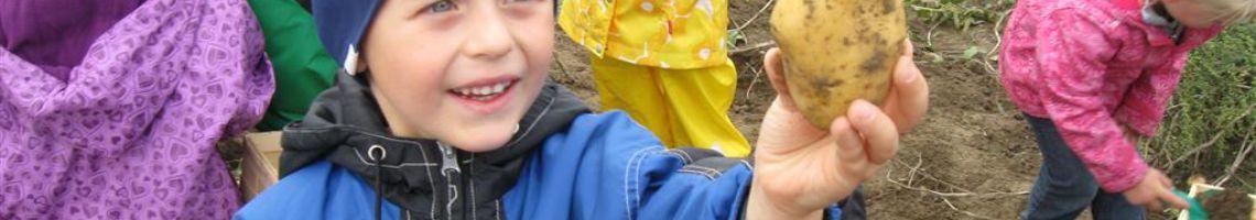 Kartoffelernte mit Kindergarten