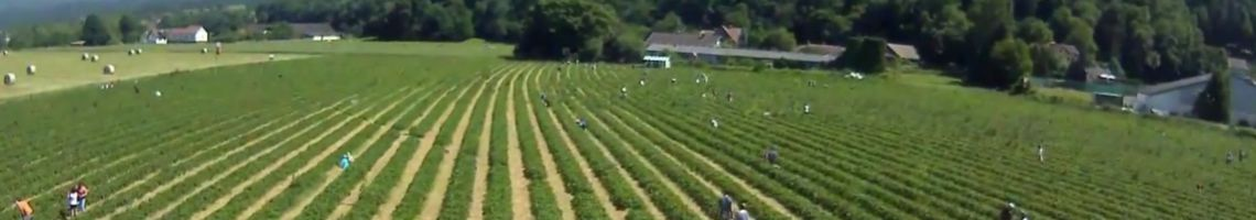 Erdbeerland/Beerenland Video